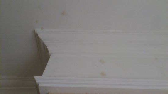 mold on crown molding in house